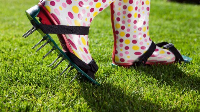 Best Lawn Spiker