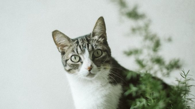 Best Plants to Deter Cats