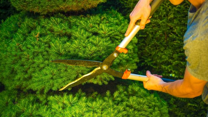 Best Topiary Shears